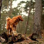 Aktiverleben mit Hund Wanderungen