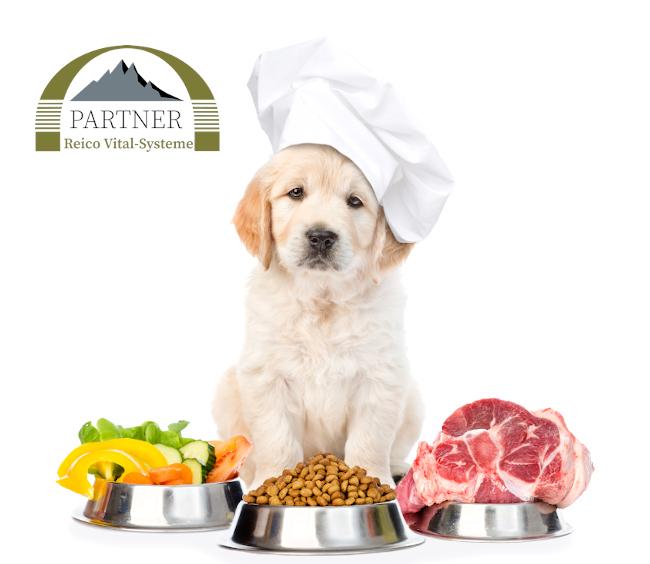 Ernährung Hund
